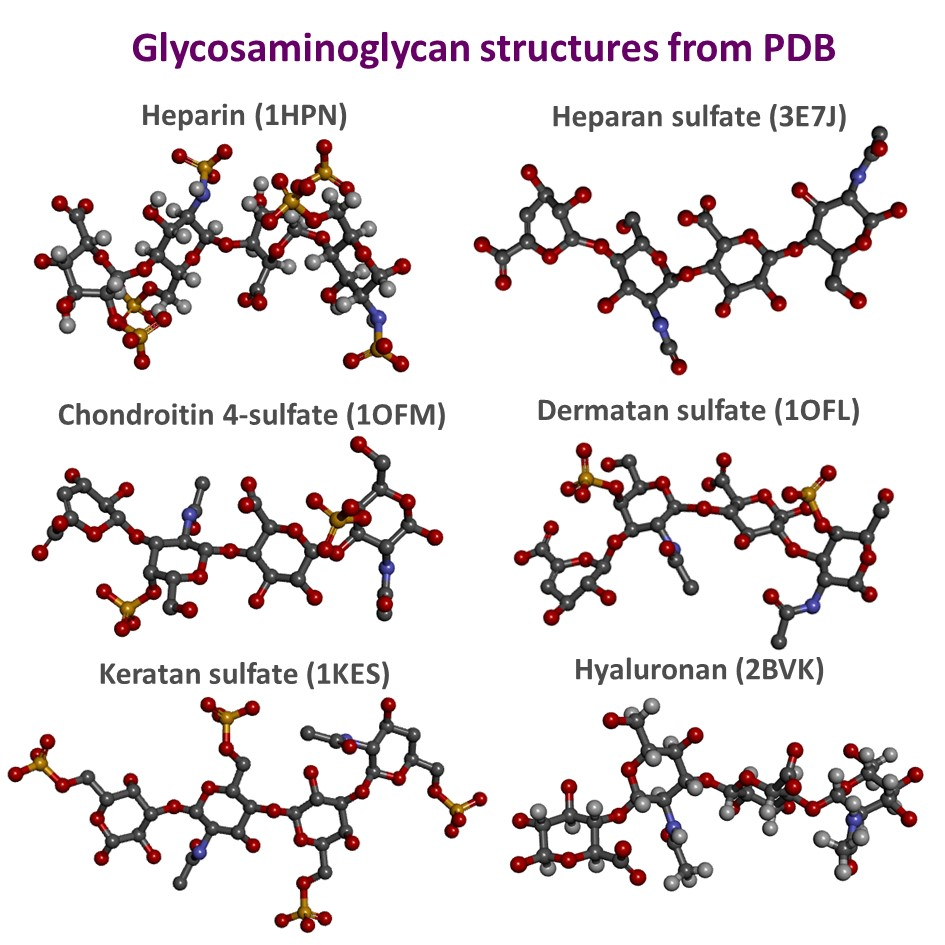 Molecular-Interactions-between-sulfated-glycans-and-their-protein-binding-partner