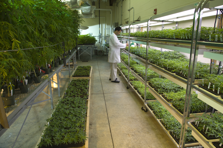 Marijuana grow room at the University of Mississippi