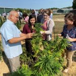 Dr. ElSohly shows three people the leaves of a marijuana plant in outdoor field