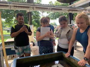 Four students stand around an outdoor watertable with sponge specimen in it.